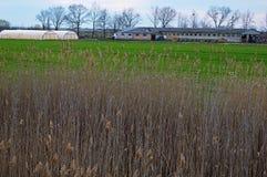 Bondgård och växthus i bakgrunden bak säven Royaltyfri Fotografi