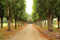 Bondgenoot van bomen in de Herfst royalty-vrije stock foto