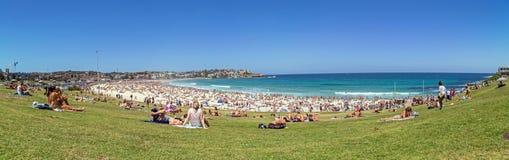 Bondi Beach Panorama Royalty Free Stock Image