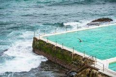 Bondi beach swimming pool Royalty Free Stock Images