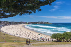 Bondi Beach Stock Image