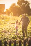 Bonding. Grandfather and granddaughter in the field with pumpkins. Copy space royalty free stock photos