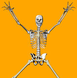 Bone 105. This a skeleton in a pose vector illustration