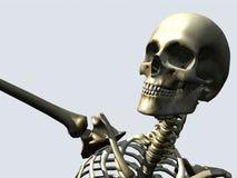 Bone 12 Stock Photo