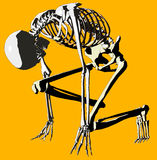 Bone 143. This a skeleton in a pose Stock Photo