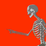 Bone 227 Royalty Free Stock Photos