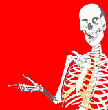 Bone 231. A skeleton in a pose Stock Photos
