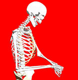 Bone 241 Royalty Free Stock Photography