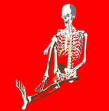 Bone 260 Stock Image
