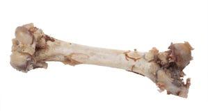 Bone Royalty Free Stock Image