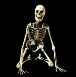 Bone 36. This is an skeleton in a knelling pose Stock Images
