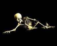 Bone 41 Stock Images