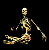 Bone 6. This is an skeleton in a sitting pose Stock Photos