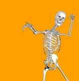 Bone 82 Royalty Free Stock Photography