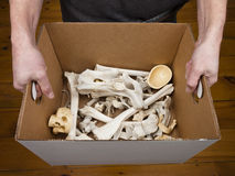 Bone Box Stock Photos