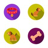 Bone, collar, sit, food.Dog set collection icons in flat style vector symbol stock illustration web. Bone, collar, sit, food.Dog set collection icons in flat Royalty Free Stock Images