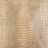 Bone Colored Embossed Gator Back Leather Texture Royalty Free Stock Photography