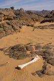 Bone in desert. Isolated bone in the sahara desert Stock Photo