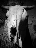 Bone dry. BW animal skull royalty free stock photo