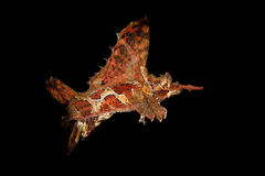 Bone fish in the dark Royalty Free Stock Images