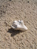 Bone in the sand. Picture of bone of unidentified animal or bird in the sand is taken on the Baltic sea coast in Lithuania near village Sventoji stock image