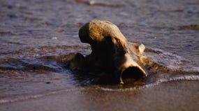 Bone in the sea Stock Photo