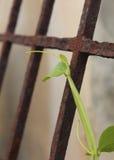 Bone setter on a dilapidated iron door Royalty Free Stock Photos