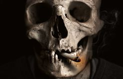 Bone, Skull, Skeleton, Jaw Royalty Free Stock Image
