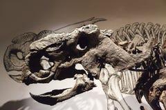 Bone Story Stock Image
