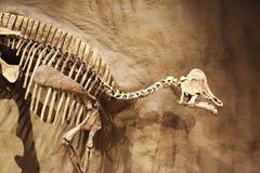 Bone Story Stock Photos