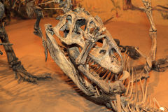 Bone Story. Drumheller, Canada - Mar 27 2016: Visitors flock to the dinosaur exhibits at the entrance of the Royal Tyrrell Museum . The museum is famous for its Stock Images