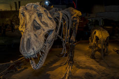 Bone Story. Drumheller, Canada - Mar 27 2016: Visitors flock to the dinosaur exhibits at the entrance of the Royal Tyrrell Museum . The museum is famous for its Stock Photography