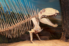 Bone Story. Drumheller, Canada - Mar 27 2016: Visitors flock to the dinosaur exhibits at the entrance of the Royal Tyrrell Museum . The museum is famous for its Stock Image