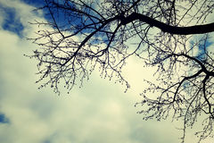 Bone of trees. When you look up, what will you see the world Royalty Free Stock Photography