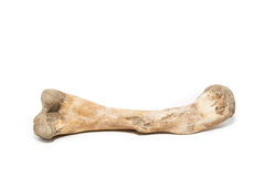Bone on white background Royalty Free Stock Image