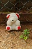 Boneca e plant2 Fotografia de Stock