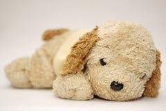 Boneca preguiçosa do cão Imagens de Stock