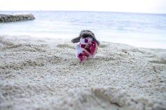 Boneco de neve em Maldivas Imagens de Stock Royalty Free
