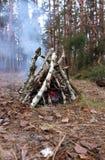 Bonefire del abedul con humo en bosque de los árboles de pino en otoño Humo de la chimenea en campo turístico Ir de excursión día Fotos de archivo