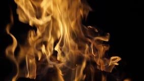Bonefire, Fire flames in campfire, campsite at Masai Mara Park,. Kenya, slow motion stock video