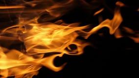 Bonefire, Fire flames in campfire, campsite at Masai Mara Park, Kenya, vertical video,. Slow motion stock video