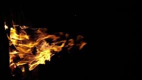 Bonefire, Fire flames in campfire, campsite at  Masai Mara Park, Kenya, vertical video, slow motion. Bonefire, Fire flames in campfire, campsite at Masai Mara stock video