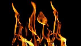 Bonefire, llamas del fuego en la hoguera, sitio para acampar en el Masai Mara Park, Kenia almacen de metraje de vídeo