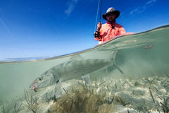 Bonefish on the flats Royalty Free Stock Images