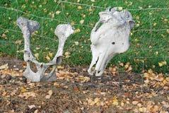 bones старая Стоковые Фотографии RF