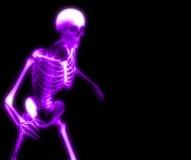 Bones 27 Stock Images