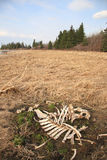 Bones Stock Images