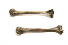 Bones. Two human leg bones. Has white background and also could be use to represent danger or poison royalty free stock photo