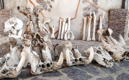 Bones of ancient animals Stock Photos