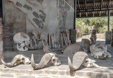 Bones of ancient animals Royalty Free Stock Photo